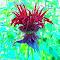 FLOWER-RED ALIEN FOREST EFFECT.jpg