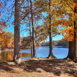 Beauty of Fall by Joe Machuta - Landscapes Waterscapes ( falllake, memphis, fall, forest, fall lakes, maple )