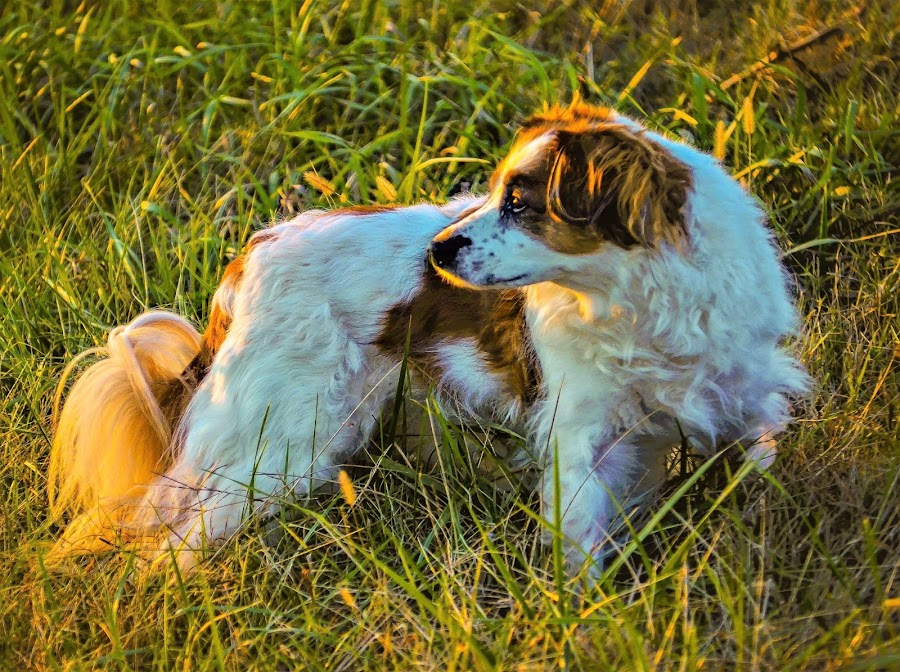 Maggie Lost the Squirrel  by Tim Hall - Animals - Dogs Portraits ( spaniel, hunting dog, birding dog,  )