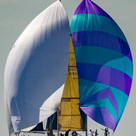Vallarta Cup race in Mexico by John Pounder - Transportation Boats ( vallarta cup, mexico, sail, boat, sailboat, race, puerto vallarta )