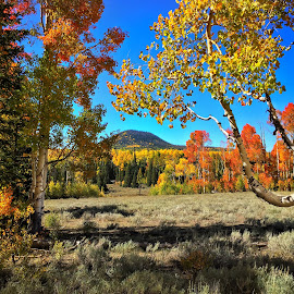 Presenting Autumn! by Blaine Cox - Instagram & Mobile iPhone ( #utah #fall )