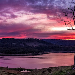 Lake Lyell sunset by David Spillane - Landscapes Mountains & Hills ( colour, water, orange, hills, mountain, delightful perspective, tree, sunset, dam, nsw, lithgow )