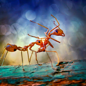 Smackdown by Ruri Irawan - Animals Insects & Spiders ( animals, macro, art, insects )