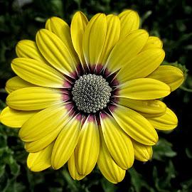 OLI osteo 02 by Michael Moore - Flowers Single Flower (  )