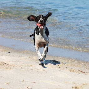 by Tracy Gymellas - Animals - Dogs Running