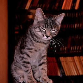 by Stanisław Sawin - Animals - Cats Kittens