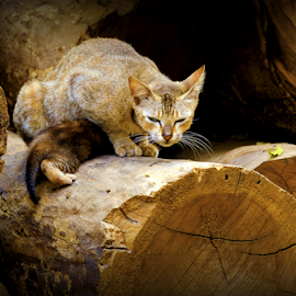 Posing in the woods by Anindya Karmakar - Animals - Cats Portraits ( cat, wood, posing )