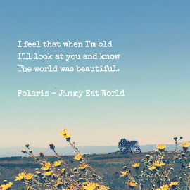 Polaris by Gladys Guiang - Typography Quotes & Sentences ( love, jimmy eat world, music, song, band, sky, words, blue, rock, typography, flowers, polaris, lyrics )
