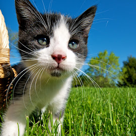First Day Outside  by Catherine Trudeau - Animals - Cats Kittens