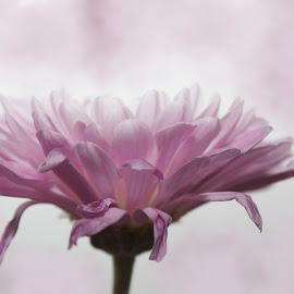 by Mitzi Sibert - Digital Art Things ( flower art digital purple decor )