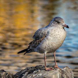 Bird on Rock by Rick Pelletier - Novices Only Wildlife