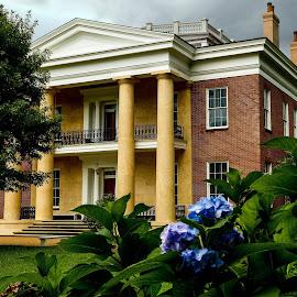 Melrose Plantation by David Walters - Buildings & Architecture Homes ( melrose, lumix fz200, ms, natchez, buildings, landscape, homes, plantation )