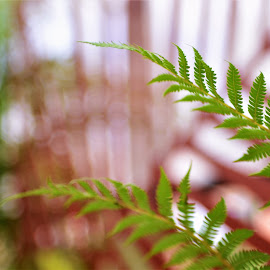 Ferns  by Scot Gallion - Nature Up Close Other plants (  )