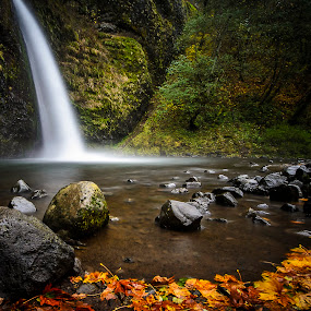 Horsetail Falls in the fall by Scott Wood - Landscapes Waterscapes ( water, oregon, columbia, gorge, colors, waterfall, horsetail, leaves, falls, fall, d7000, trees, nikon, rocks, river,  )