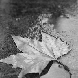 Autumn leaves by Monique Fouche - Nature Up Close Leaves & Grasses