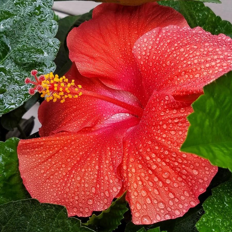 by Eddie Jeffries - Flowers Single Flower (  )
