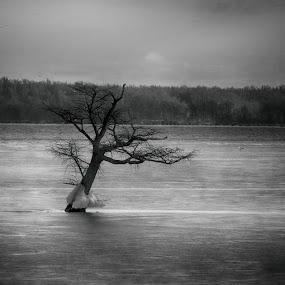 Lone Survivor by Pennye Thurmond - Black & White Landscapes ( reelfoot lake, tree, winter, dead, ice, water,  )