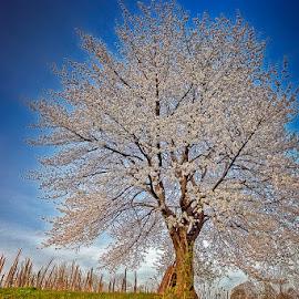by Marina Đanić - Nature Up Close Trees & Bushes