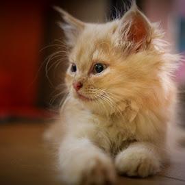 My Putih potret by Eeezam Mon - Animals - Cats Kittens