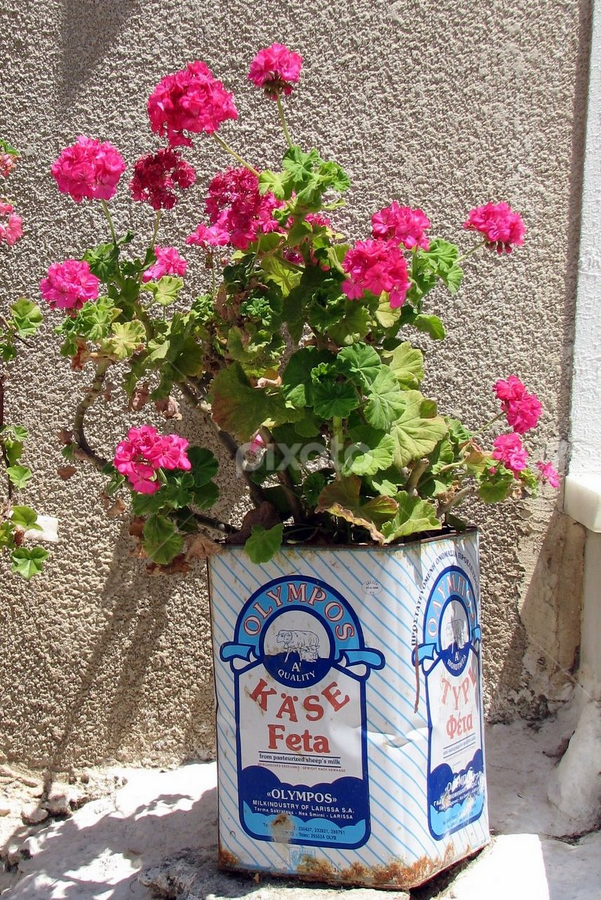Please Recycle by Vonelle Swanson - Nature Up Close Flowers - 2011-2013 ( feta, food, greece, naxos, cheese, flowers, pot )
