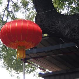 Chinese Lantern by Amber O'Hara - Artistic Objects Still Life ( lantern, red, tree, street, china,  )