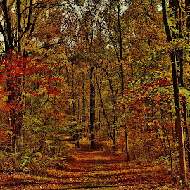 Smithsonian Forest Scene 2017 by Matthew Beziat - Landscapes Forests ( smithsonian environmental research center, autumn foliage, autumn, fall foliage, fall, anne arundel county, maryland, smithsonian, edgewater,  )