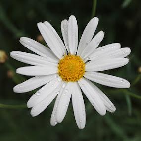 Flower by Mi Mundo - Nature Up Close Flowers - 2011-2013 ( flower )