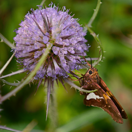 by Pam Satterfield Manning - Nature Up Close Other Natural Objects ( butterfly, macro, thistle, lomo, pattern, purple, texture, wings, green, nature up close, pointed, insect, bokeh, flower,  )