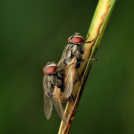 When harry meet sally by Anthoni Lee - Animals Insects & Spiders