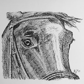 Horse Detail1 by Anika McFarland - Drawing All Drawing ( horse detail, ink drawing, horse drawing, drawing, ink )