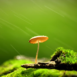 by Nandes Sicknoise - Nature Up Close Mushrooms & Fungi