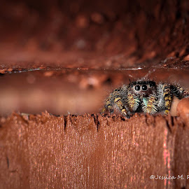 by Jessica Rasche - Animals Insects & Spiders