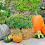 by Lori Rose - Public Holidays Halloween