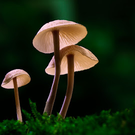 A Family by Tuan Pham - Nature Up Close Mushrooms & Fungi ( mushrooms, macro, moss, forest, green, nature, light, wet, vietnam, cute )