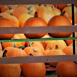 Signs of HALLOWEEN  by Lavonne Ripley - Public Holidays Halloween