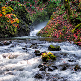 Falls colors in the Columbia River Gorge by Chris Bartell - Landscapes Waterscapes ( water, oregon, waterfall, landscape, bridal veil )