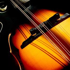 Mandolin 3 by Lisa Chilton - Abstract Macro