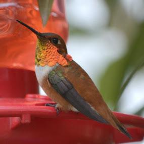 by Fran Juhasz-Mckitrick - Animals Birds