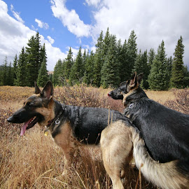 Enjoying the moment  by Jennifer Cessna - Animals - Dogs Portraits
