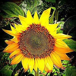 by Rebecca Pollard - Flowers Single Flower (  )