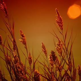 by Cenk M - Landscapes Sunsets & Sunrises