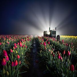Foggy Morning at Wooden Shoe Tulip Farm by Jake Egbert - Landscapes Prairies, Meadows & Fields ( oregon, light painting, tulip farm, fog, john deere, 2015, tulip festival, tulip, woodburn, wooden shoe tulip farm )