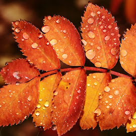 The signs of Fall. by Denton Thaves - Nature Up Close Leaves & Grasses ( seasons )