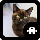 Game Cat Puzzle apk for kindle fire