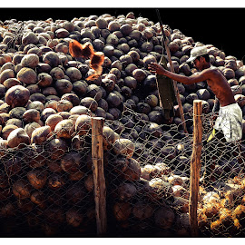 Dried Coconut by Quốc Thi Nguyễn - Digital Art People ( coconut, streetife, vietnamese, worker, people, asian )