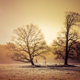 tree's in foggy meadow at sunrise by Joost Lagerweij - Landscapes Prairies, Meadows & Fields ( foggy, meadow, meadows, sunrise, landscape )