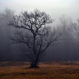 by Zoran Konestabo - Nature Up Close Trees & Bushes (  )