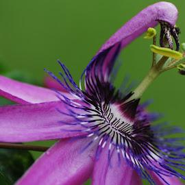 by Jane Sherwin - Flowers Single Flower