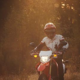 Honda  by Todd Reynolds - Sports & Fitness Motorsports
