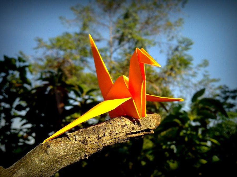 menclok in the morning by Iwan Siswanto Setiaonebudhi Nugraha - Instagram & Mobile Other ( bird, camera phone, paper, n97 mini, coferone, origami, mobile photography )